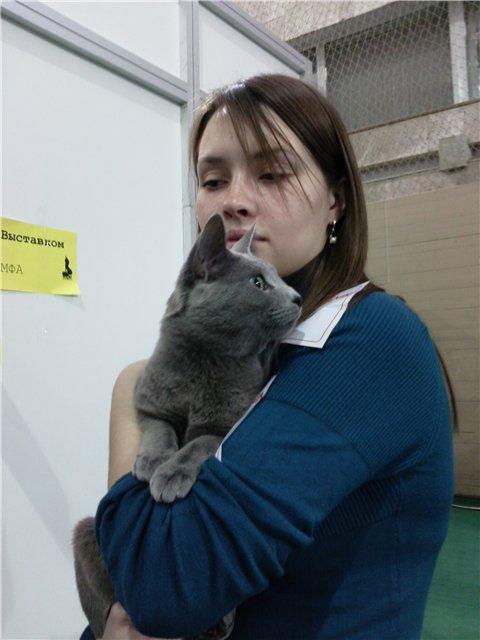 Выставка кошек, русский голубой кот