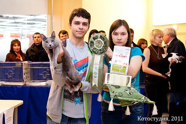 Выставка кошек, Воронеж, Best op. sex, русский голубой кот