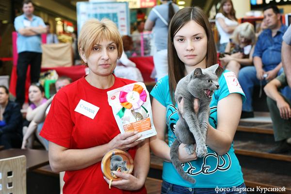 Выставка кошек, Воронеж, nom BIS, русский голубой кот