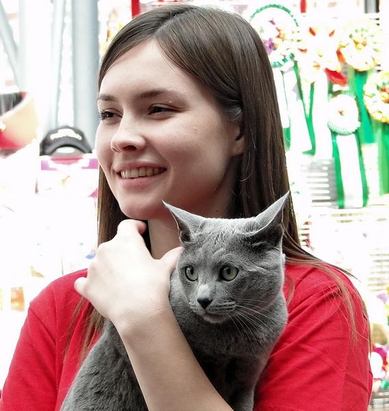 Выставка кошек, Воронеж, русский голубой кот