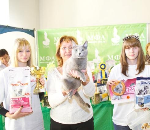 Выставка кошек, Чемпион русский голубой кот